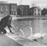LB Southwark, feeding the swans in Burgess Park, 1983