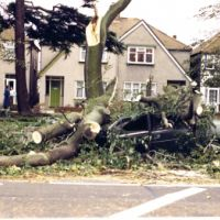 LB Bexley, tree damage in Woolwich Road in Abbey Wood after the hurricane, 1987